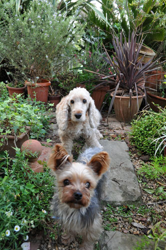 dogs525_ms