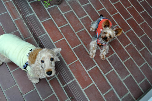 dogs520_ms