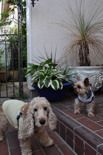 dogs531_ms