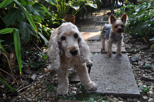 dogs713_ms