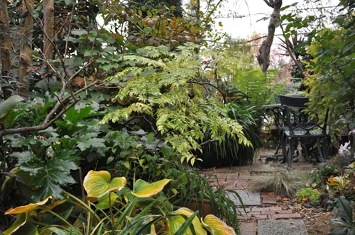 garden1123_ms