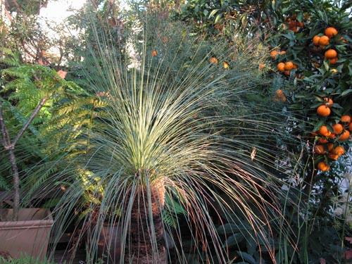 grasstree1121b_ms