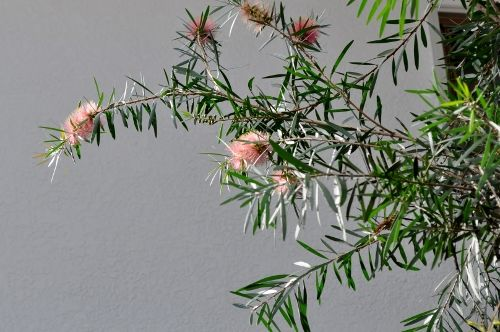 pinkbottle1014c (500x332)