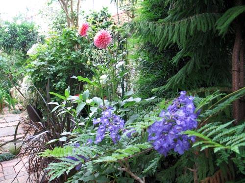 garden620