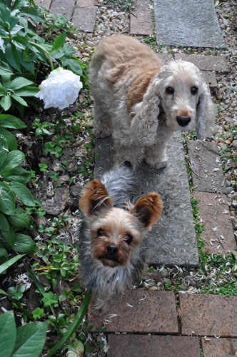 dogs528_ms