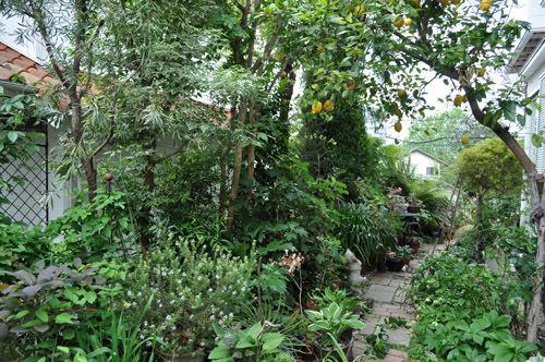 garden510_ms