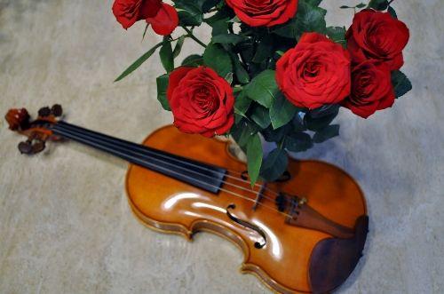 violin1031 (500x331)