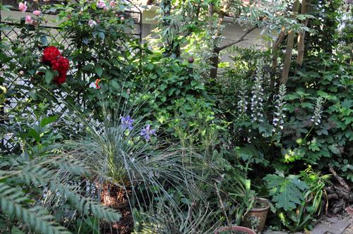garden522_ms