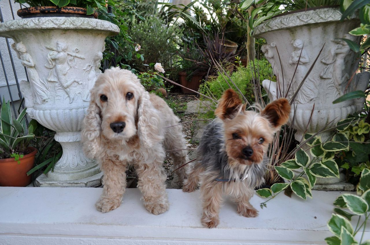dogs522_ms