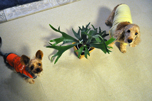 dogs512_ms