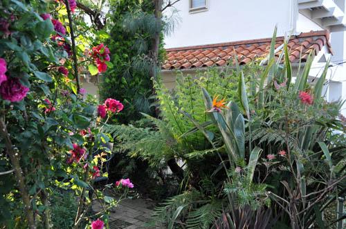 garden521_ms