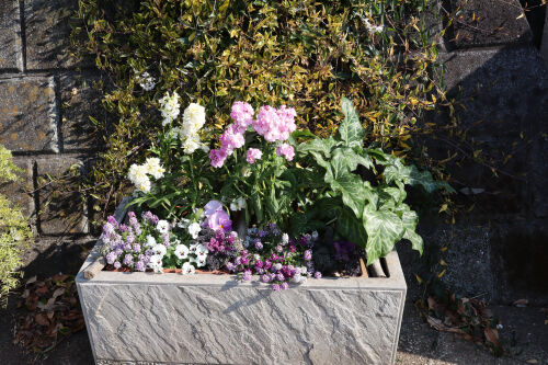 planter1114ms