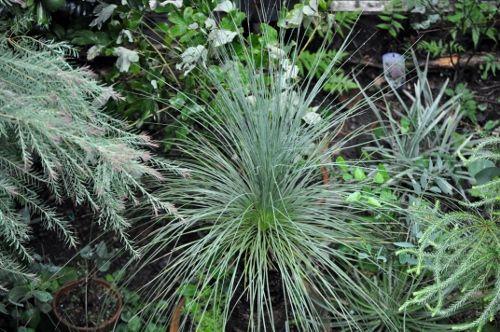 grasstree (500x332)