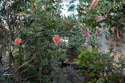 garden1023b_ms