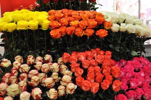 flower1030_ms