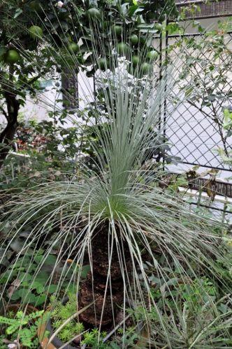 grasstree926 (332x500)