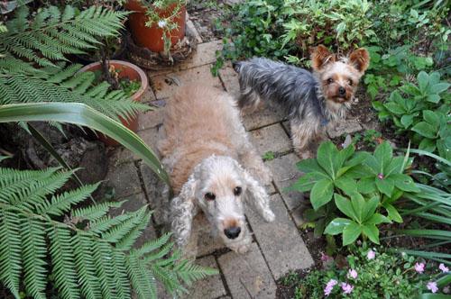 dogs526_ma