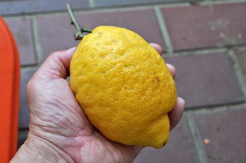 lemon529_ms
