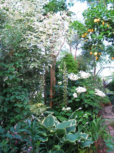 garden612b