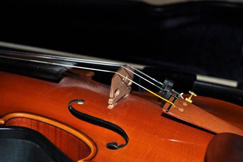 violin520
