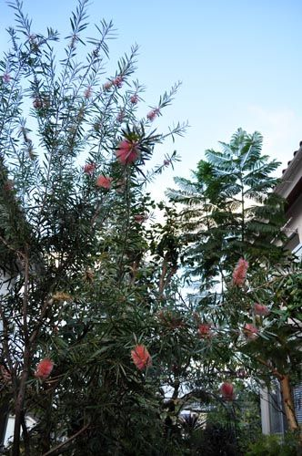 garden1023_ms