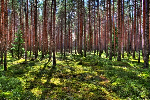 2 - Almost 50 of Estonia is covered by forest