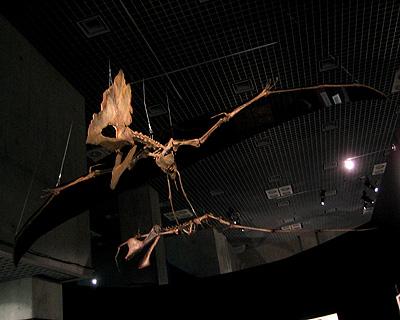 タラソドロメウスとアンハングエラの新種(国立科学博物館、2009年4月)
