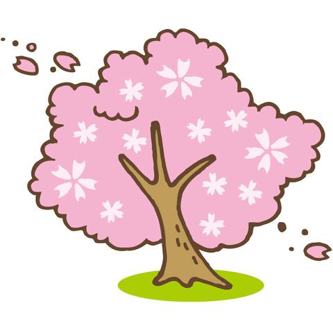 4c-sakura