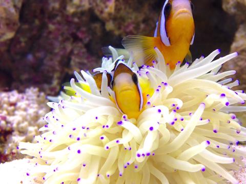 sea_anemone_image_800