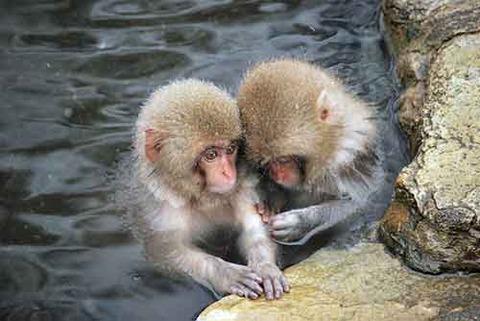 20121026_001_monkey_03