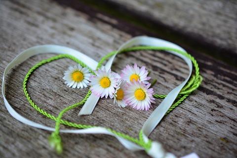 daisy-3392654_1920