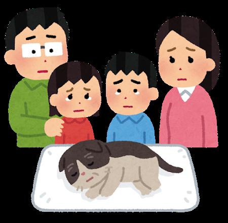 pet_kazoku_mitoru_cat