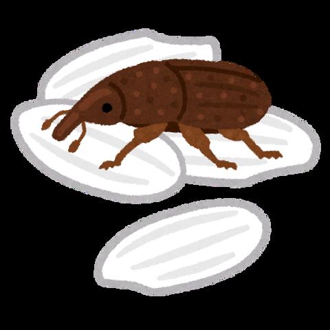 bug_kokuzoumushi_kome