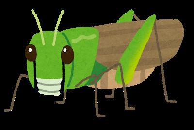bug_tonosama_batta