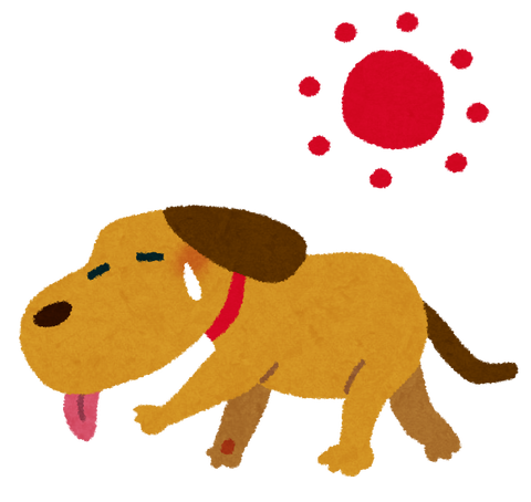 natsubate_dog