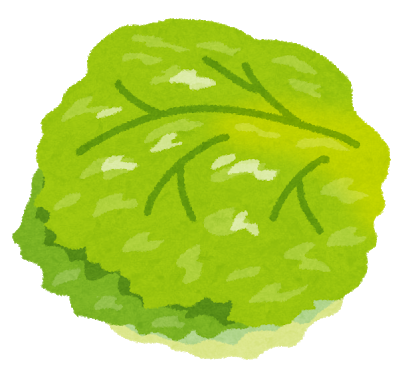 vegetable_lettuce