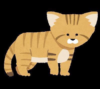 cat_sunaneko