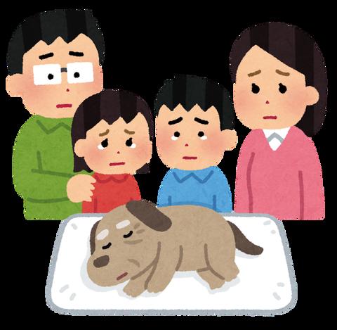 pet_kazoku_mitoru_dog