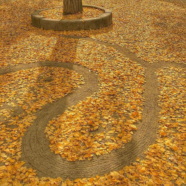 fallen-leaf-art-japan-24-58511a4aa6aa9__700