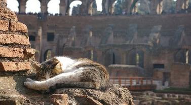 Torre-Argentina-Cat-Sanctuary-in-Rome-Faces-Extinction