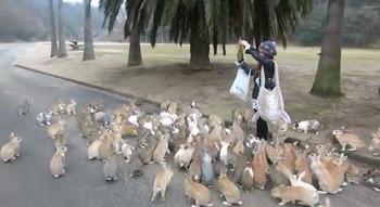 bunny-rabbit-island-japan-Ōkunoshima-