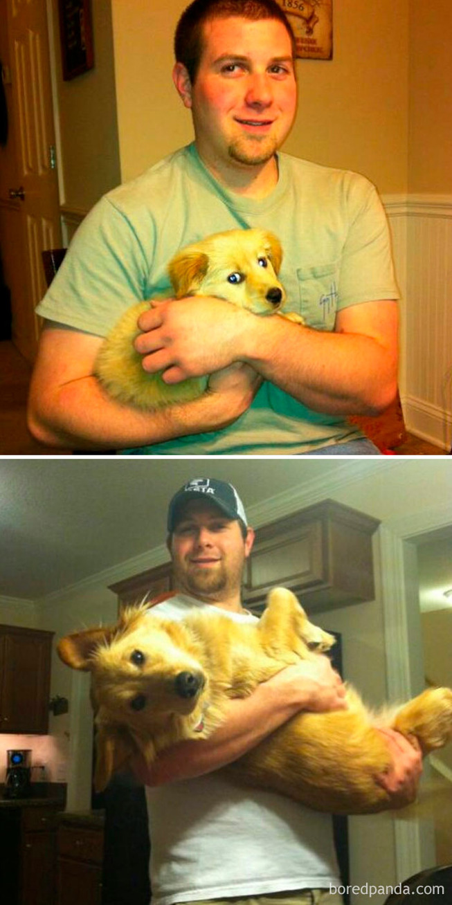 before-after-dogs-growing-up-owners-49-5be2c18f92227__700
