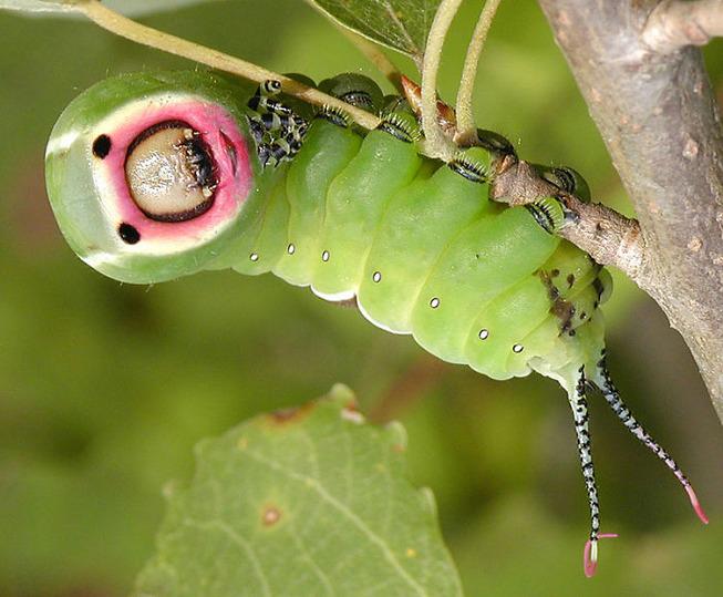 caterpillar-feet-5ef09690b1a96__700