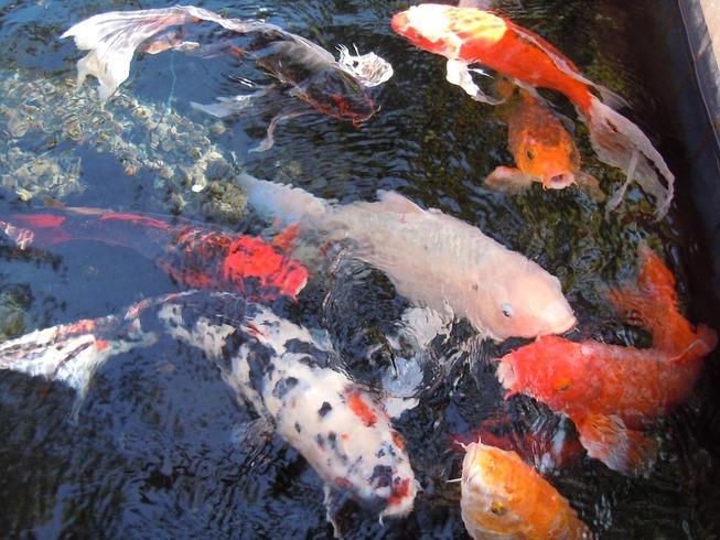 fish-113554_960_720