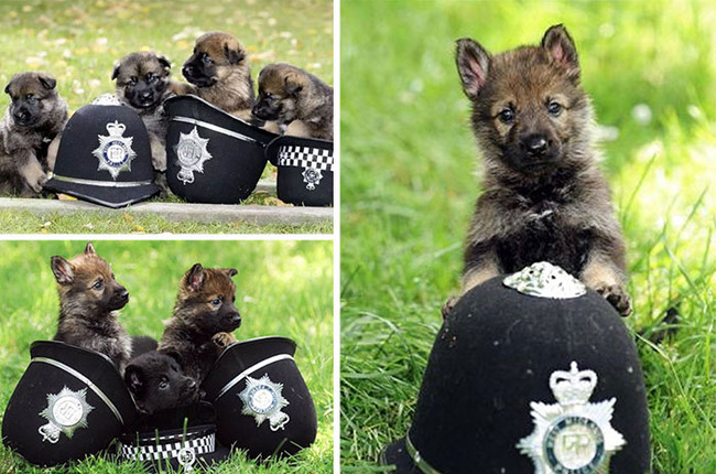 adorable-puppies-police-training-101-5f465ece05afe__700
