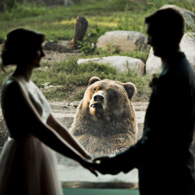 bear-photobombs-wedding3-5b9a064f671aa__700