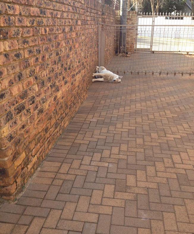 funny-dog-sleeping-positions-96-5d5f9578c9610__700