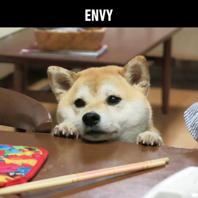 funny-cute-shiba-inu-dog-seven-deadly-sins-7-5a12ad8a0617d__700