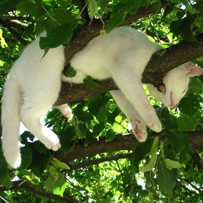 sleeping-cats-in-trees-1-5f11704db64aa__700