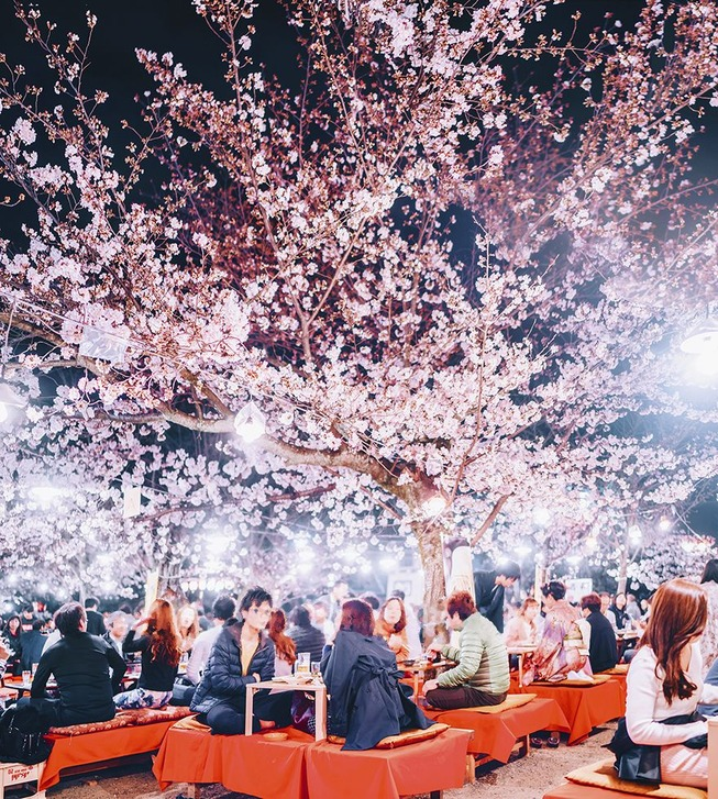 Lost-in-Kyoto-and-the-sakura-blossom-59101a996d142__880